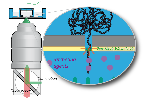 Zero Mode Waveguide for Nanopores: application to a nanoscale Brownian Ratchet.